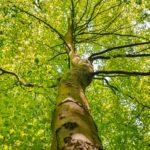 le graine normandie - Entraînez-vous à reconnaître les arbres communs en ville pour le lancement de sTREEts
